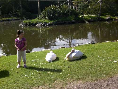 "Clara O'Keeffe cautiously wondering ""how long is that beak really?"" during her visit to Fota Wildlife Park"