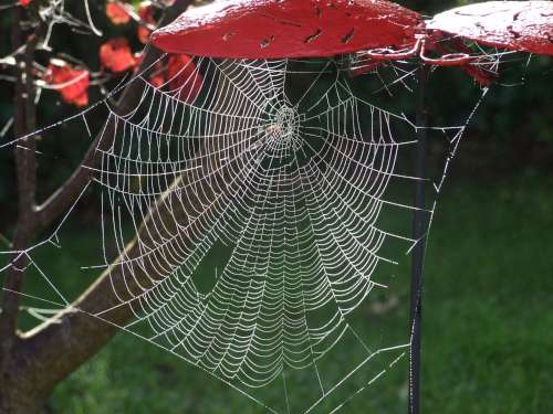 spider-500.jpg