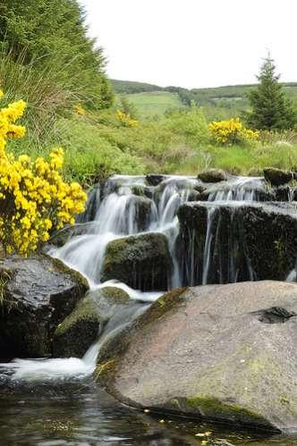 Millstreet Country Park - Babbling Stream