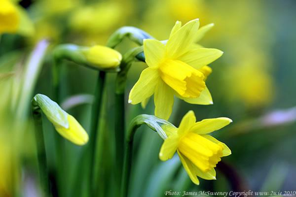 Spring at long last (www.2u.ie)
