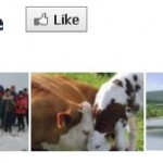 2012-02-20 Aubane Community webpage - header