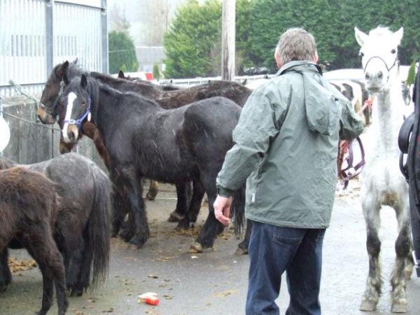 2012-03-04 March Horse Fair 01