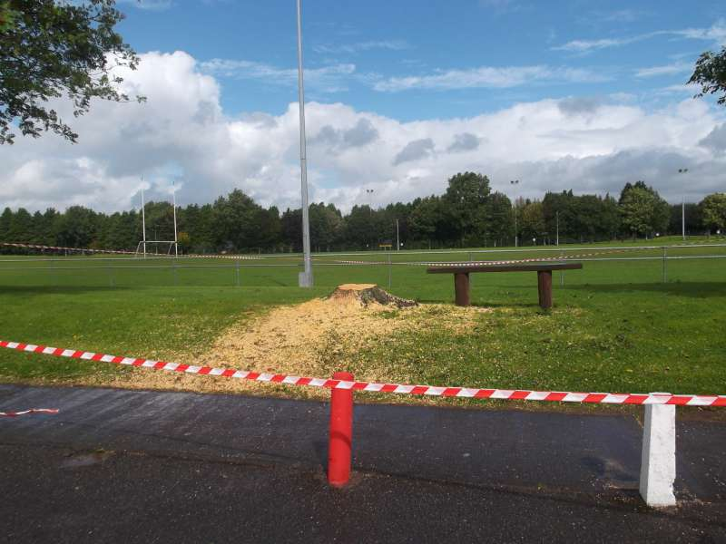 Tree felled at Millstreet Town Park following wind damage on Wednesday, 15th Aug. 2012
