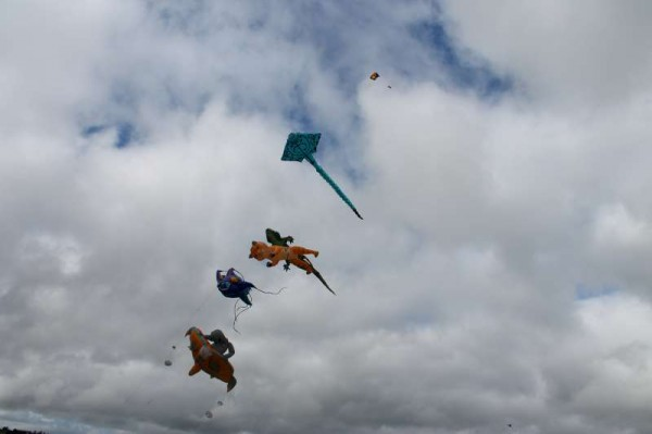 34Kite Fest at Millstreet Country Park 22nd Sept. 2013 -800
