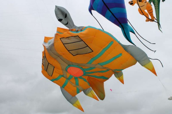 57Kite Fest at Millstreet Country Park 22nd Sept. 2013 -800