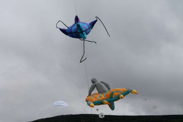 71Kite Fest at Millstreet Country Park 22nd Sept. 2013 -800