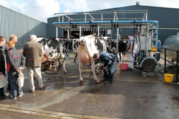 31National Dairy Show 19 Oct. 2013 -800