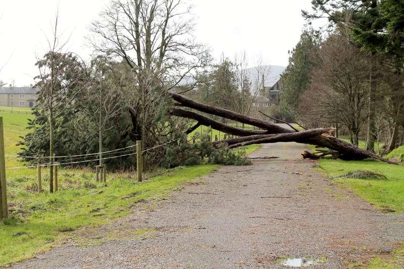 20Storm Darwin Aftermath in Millstreet 2014 -800