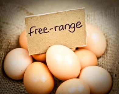 Free-Range-Eggs1