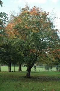 2014-10-10 Town Park - Trees cut25-800