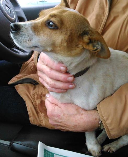 2014-10-17 Terrier found outside Centra West End