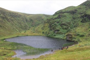 2014-08 Kippagh Lake with Cattle_