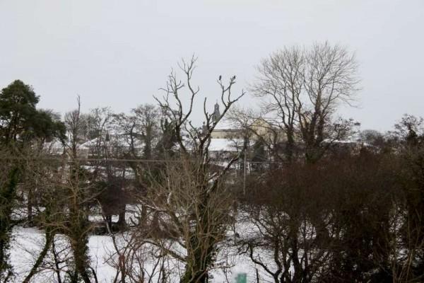 7Morning Snow in Millstreet 14 Jan. 2015 -800