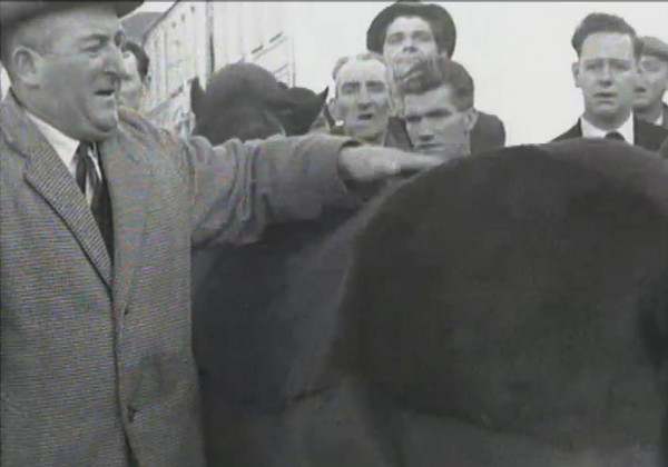 1965 March Horse Fair - an RTÉ Newsbeat report 03