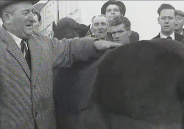 1965 March Horse Fair - an RTÉ Newsbeat report 03