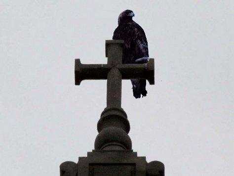 Eagle on Cross