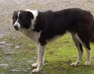 2015-09-20 Dog Found 01