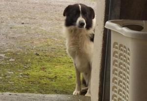 2015-09-20 Dog Found 02
