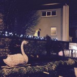 2015-11-20 Christmas Swan at West End 03