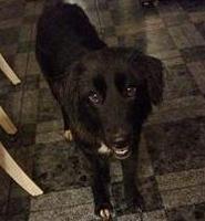 2016-03-01 Missy is missing in the Millstreet area