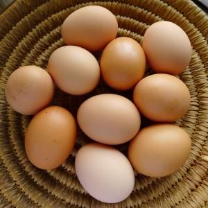 eggs-organic8 (1)