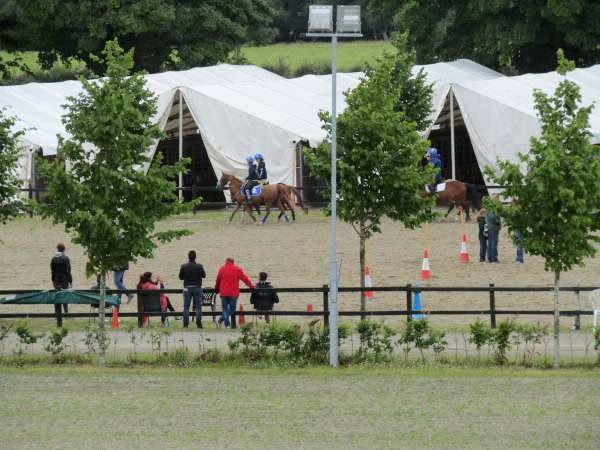 2Green Glens Prepares for World Mounted Games 2016 -600