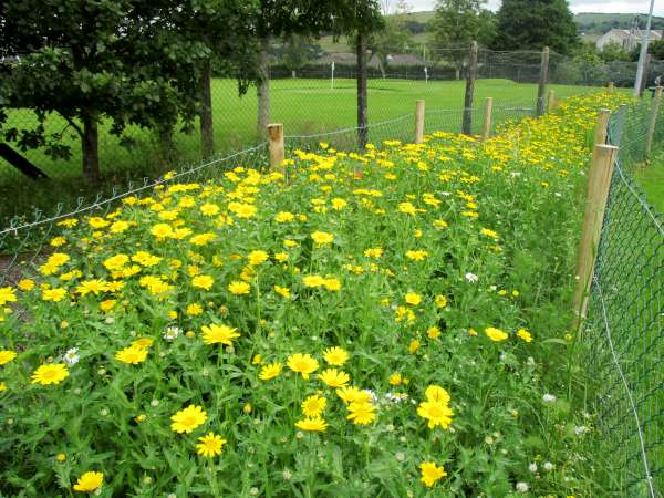 The Wild Flower Garden in the Town Park looking exquisite and so very colourful.