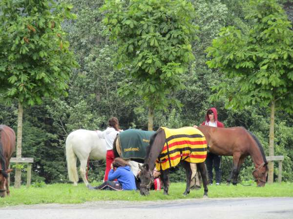 41Green Glens Prepares for World Mounted Games 2016 -600