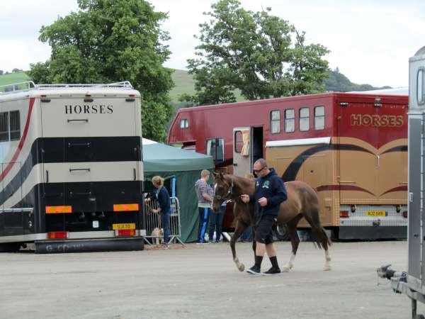 4Green Glens Prepares for World Mounted Games 2016 -600