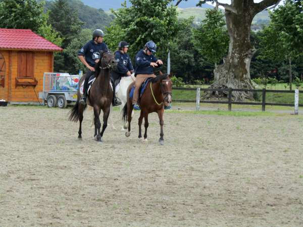 51Green Glens Prepares for World Mounted Games 2016 -600
