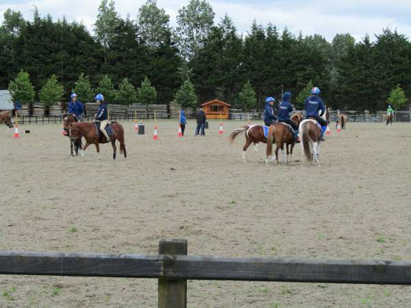 52Green Glens Prepares for World Mounted Games 2016 -600